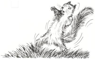 Fighting-Squirrel